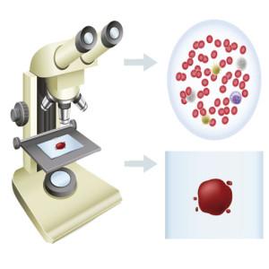 microscopiomuestra