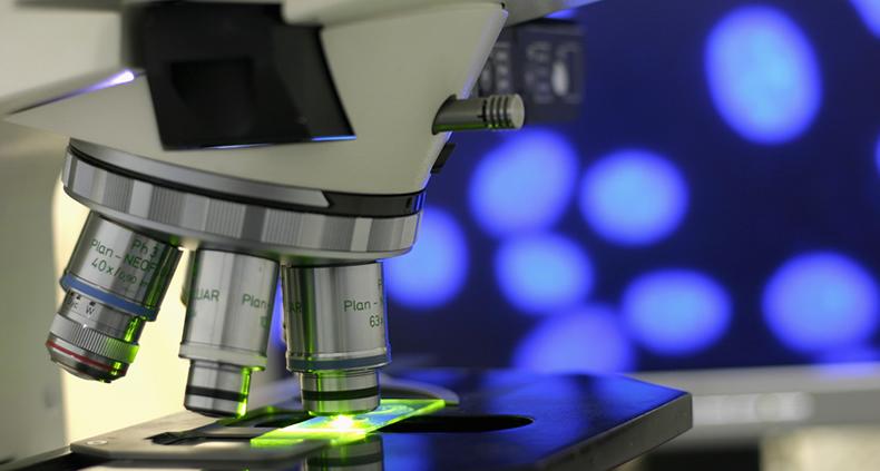 microscopia-morfologica-celular